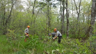 Pineola_Bog_Workday_05-09-17 (12)