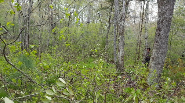 Pineola_Bog_Workday_05-09-17 (15)