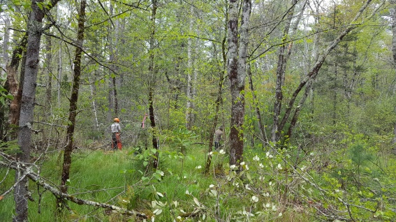 Pineola_Bog_Workday_05-09-17 (20)