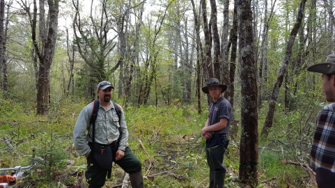 Pineola_Bog_Workday_05-09-17 (26)