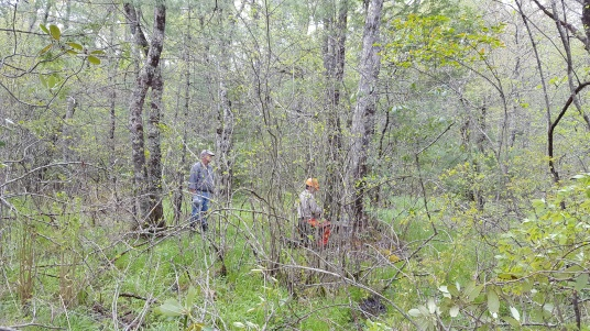 Pineola_Bog_Workday_05-09-17 (27)