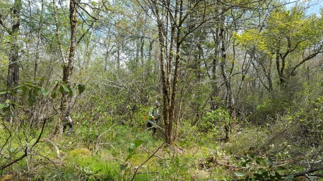 Pineola_Bog_Workday_05-09-17 (29)