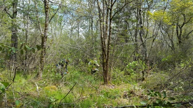 Pineola_Bog_Workday_05-09-17 (30)