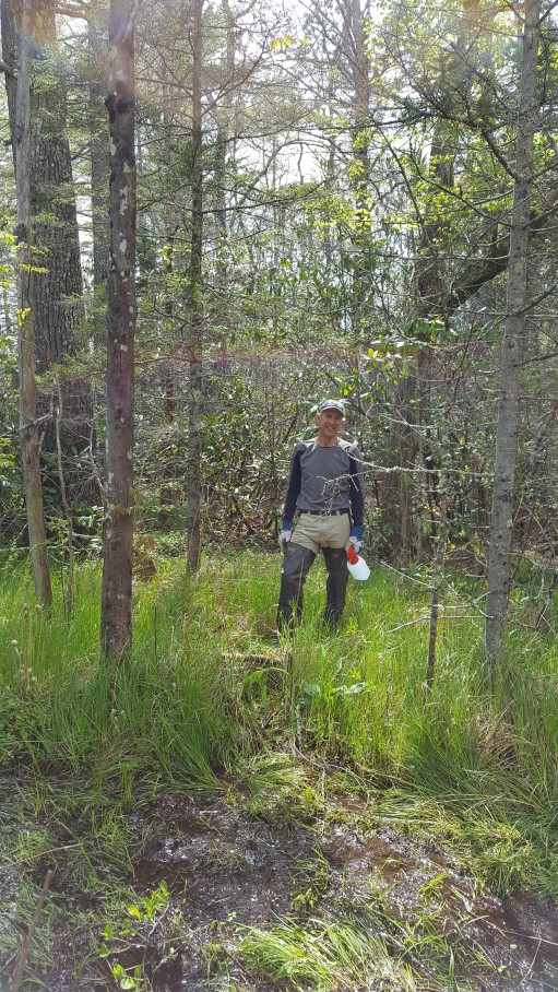Pineola_Bog_Workday_05-09-17 (43)