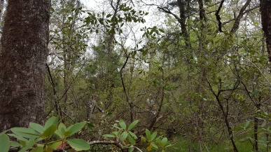 Pineola_Bog_Workday_05-09-17 (6)