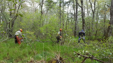 Pineola_Bog_Workday_05-09-17 (9)