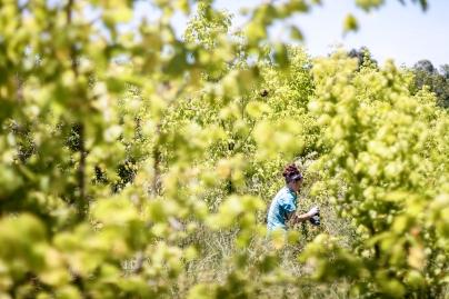 brittany-watkins-applies-herbicide_48754344456_o