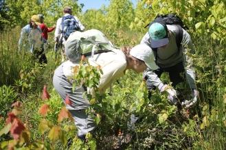 olivia-votava-and-bob-gale-inspect-a-multi-flora-rose-shrub_48754324991_o